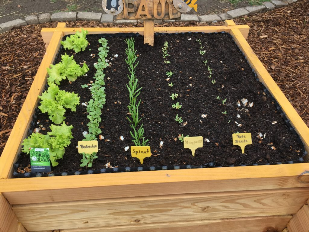 Hochbeet gepflanzt mit Salat, Radieschen, Spinat, Mangold, Rote Beete